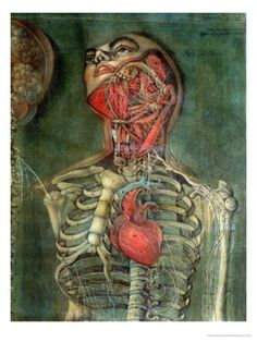 Throat and Heart, Plate Anatomy of the Visceras, Dissected, Painted and Engraved by Gautier, 1745 Giclee Print by Jacques Fabien Gautier d'Agoty at Art.com