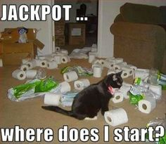 The real cause of the toilet paper shortage - LOLcats is the best place to find and submit funny cat memes and other silly cat materials to share with the world. We find the funny cats that make you LOL so that you don't have to. Funny Animals With Captions, Funny Captions, Funny Cat Memes, Funny Animal Pictures, Funny Humor, Pet Pictures, Funniest Animals, Funniest Pictures, Animal Pics