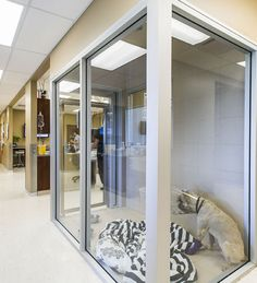 Boarding - 2013 Veterinary Hospital of the Year: Allandale Veterinary Hospital, Ontario, Canada
