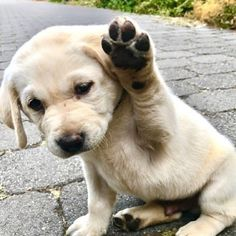 FRIDAY Feels xoxo 🙌Much love and cuteness sending your way mid Friday 💕Raise your paws up its |||The Weekend Babe||| 📸PC:@animaladdicts . #apricotlanefargo #apricotlane #furmama #doglover #furbaby #itsfriday #friday #fridaymood