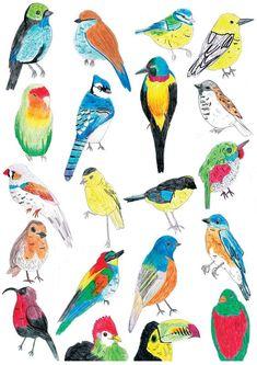 Tropical Bird Illustration: