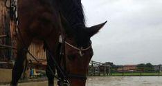 EQWO #Glücksmomente, 09. Dezember   Christina Limmer und Chequilla  #glücksmoment #adventkalender #pferdeliebe #pferd #pferdefotografie Horses, Animals, December, Animais, Animales, Animaux, Animal, Horse, Dieren