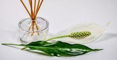 Scopri di più sugli Oli essenziali >> http://www.noene-italia.com/oli-essenziali/  #oliEssenziali #medicina #medicinaAlternativa