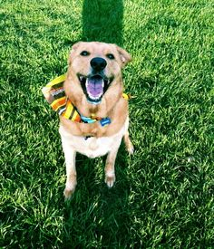 The happiest dog ever! My Marley moo!