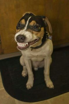 I LOVE to see smiling dogs so much!
