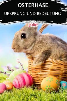 Woher kommt eigentlich der Osterhase? Und was bedeutet diese Ostertradition? Hier erfährst du alles, was du wissen musst. Rabbit, Animals, Easter Bunny, Kawaii, Easter Activities, Knowledge, Bunny, Rabbits, Animales