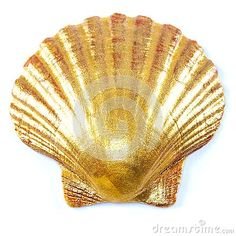 Close up of golden painted scallop shell isolated on white.