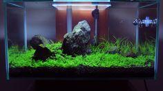 Planted Fluval Edge