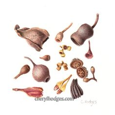 The Gallery page features many different botanical and insect paintings that I have painted.