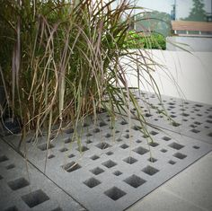 residential tree guards - Google Search