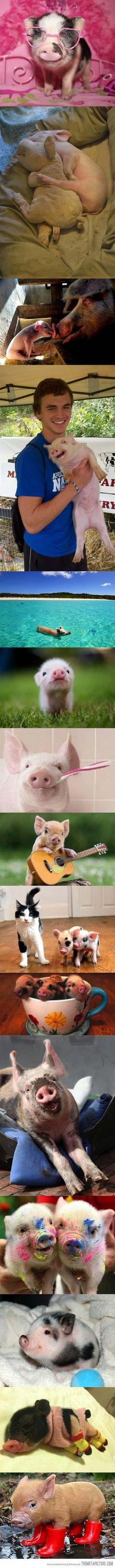 So many piggies!