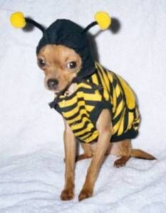 """""""save me""""  #dogs #animals #costumes"""