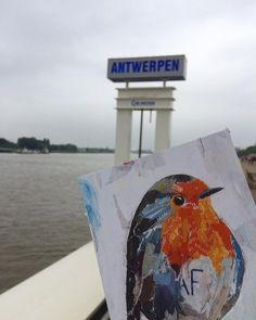 OUR LITTLE ROBIN IN ANTWERP! /  postcard / small edition by the artist from the original collage artwork / by ©philippe patricio /all rights reserved