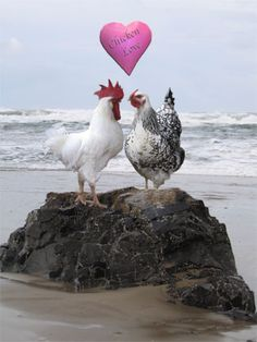 Love Chickens | PhotoShopped Pets | Hone your PhotoShop skills and post fun pictures ...