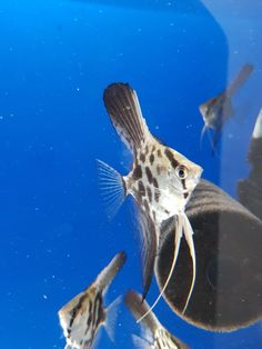 Direct shipping to hobbyists, breeders, the best fish stores. Tropical Fish Store, Discus, Angel Fish, Fish Tanks, Cichlids, Baby Bunnies, Freshwater Fish, Ocean Life, Aquarium Fish