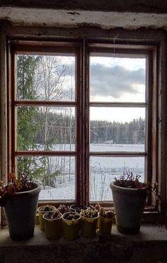 Two Old Farm House Windows