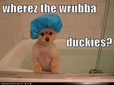 funny dog pictures - wherez the wrubba duckies?