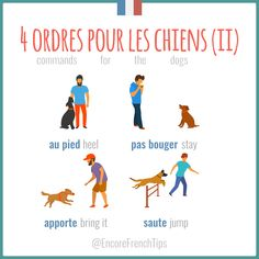 Speak French to your dog Learn French with