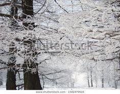 Park Winter Landscape Frozen White Fairy Stock Photo (Edit Now) 1582479916 Winter Landscape, Fairy Tales, Photo Editing, Royalty Free Stock Photos, Frozen, Park, Illustration, Artist, Photography