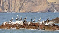 Ballestas Islands, Paracas National Reserve.  #ballestasisland  #paracasreserve  #peruvianattractions  #triptoperu  #familyvacations  #machutravelperu   #vacationsinperu