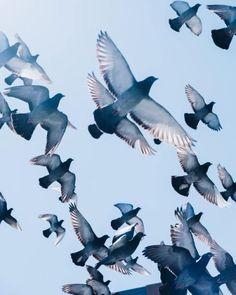 Stunning photo of a flock of birds in flight Erstaunliches Foto einer Vogelschwarm im Flug Birds In The Sky, Flock Of Birds, Wild Birds, Birds In Flight, Flying Photography, Wildlife Photography, Bird Drawings, Animal Drawings, Flying Pigeon