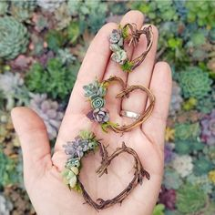 Mini Living Succulent Heart Wreath Magnets - Set of 3 Cacti And Succulents, Planting Succulents, Planting Flowers, Cactus Plants, Succulent Gifts, Succulent Wreath, Cactus Leaves, Deco Nature, Deco Floral