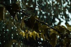 Otoño Abrilianoarte art fotografía photography photographer photoshooting nikon reflex rain lluvia