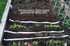 Мало кто любит ходить по грядкам и прореживать всходы, только потому что посадили семена слишком близко. Как этого избежать? А вот. Всем растениям нужно расстояние, чтобы они взошли и росли правиль…