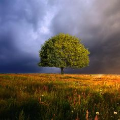 Photograph tree 1 by Barbara Florczyk on 500px