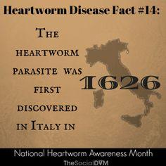 Heartworm Disease Fact 14