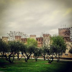 Olivos del Reino #igerszg