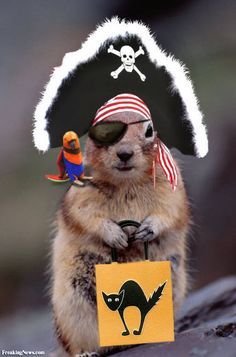 It's the time of year again for crazy Halloween pictures. Funny pictures, selected from our online collection. Squirrel Pictures, Funny Animal Pictures, Cute Pictures, Funny Photos, Halloween Costumes Pictures, Pet Costumes, Baby Animals, Funny Animals, Cute Animals
