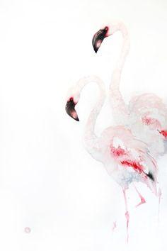 Lesser Flamingoes (Unframed)