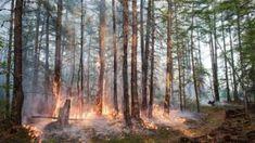 Arctic Circle sees 'hottest-ever' temperatures - BBC News