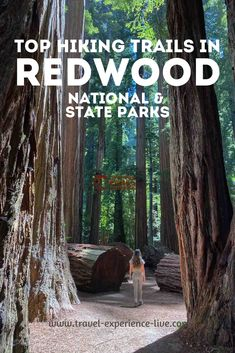 The best trails and hikes in Redwood National Park and State Parks, California Nature Story, Redwood Forest, Crescent City, Best Hikes, Day Hike, Hiking Trails, State Parks, National Parks, California