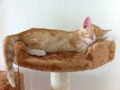 Was Du nach der Kastration von Katzen beachten solltest und wie du Dich am besten verhältst.