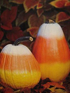 candy corn pumpkins!