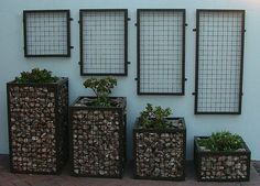 Gabion planters with wall-mounted trellises
