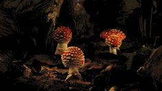 Time lapse of mushrooms springing up overnight