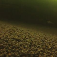 #рыба4ок #рыбалка #отдых #туризм #природа #речка #зима #ульяновск #зимняярыбалка #окунь #подводнаясъемка #ракушечник