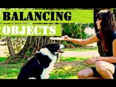 ▶ Dog Trick: How-to Teach Your Dog to Balance Objects ON THEIR HEAD - YouTube