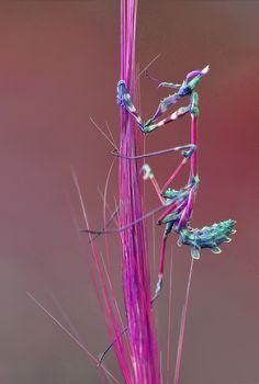 lovely mantis