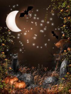 Chat Halloween, Halloween Prints, Halloween Pictures, Halloween Night, Spooky Halloween, Halloween Themes, Vintage Halloween, Halloween Pumpkins, Halloween Design
