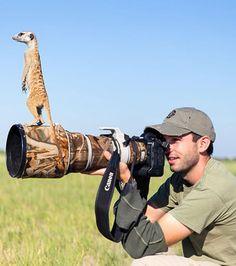 Photo : Un suricate perché sur l'appareil d'un photographe