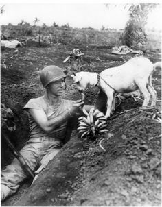 A soldier shares some bananas with a goat. Battle of Saipan, 1944.