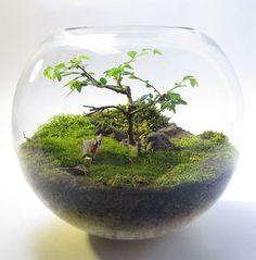 Bonsai Terrarium For Landscaping Miniature Inside The Jars 26 - DecOMG Terrarium Table, Terrarium Scene, Cactus Terrarium, Terrarium Ideas, Fairy Terrarium, Terrarium Centerpiece, Hanging Terrarium, Micro Garden, Moss Plant