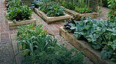 Nabycie choćby podstawowej wiedzy na temat uprawy roślin jest więc niezbędne, aby nasz ogródek warzywny był źródłem radości, a nie frustracji