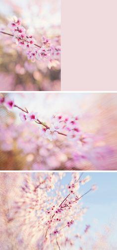 spring #lensbaby photos!