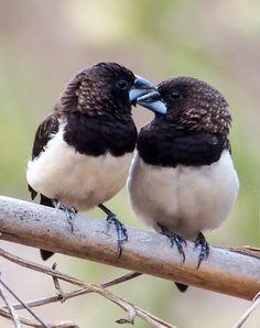 HQSP Birds - Google+                                                                                                                                                                                 Más