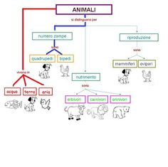 mappa animali Geography For Kids, Science For Kids, Biology, Diagram, Math Equations, Curiosity, Homeschooling, Children, Zoology